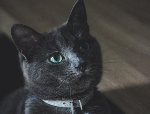 Cats and CBD: What we know and what we don't –there's a lot to learn