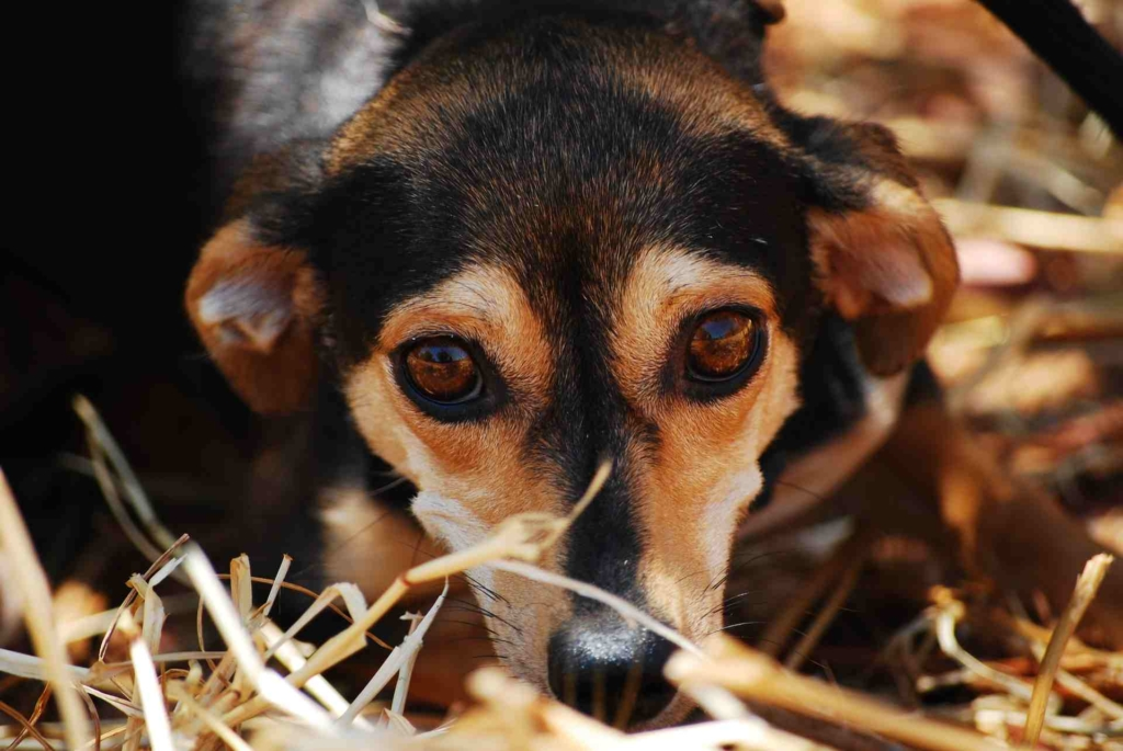 Try Pet Tincture for your anxious dog
