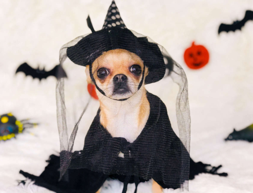 6 Tips for Trick-or-Treating with your Dog