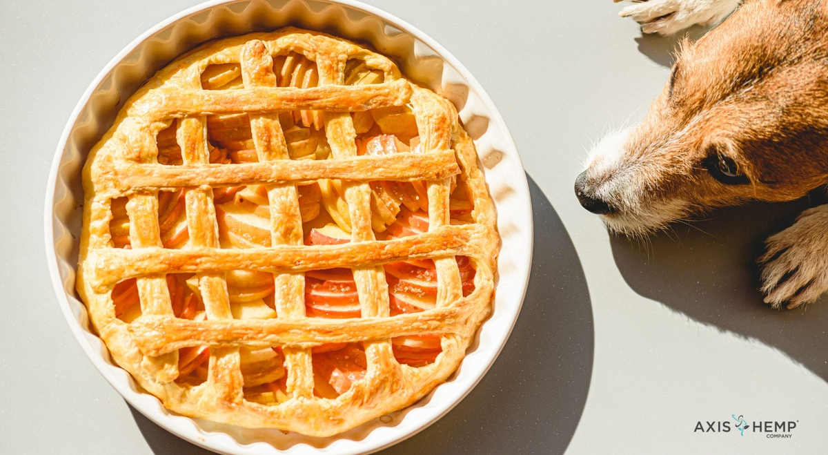 Treats You Can Share With Your Pet at Thanksgiving